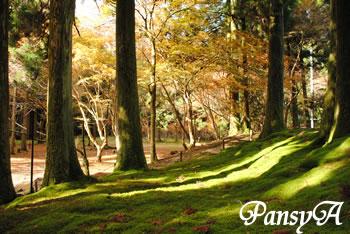秋の比叡山延暦寺の風景(4)