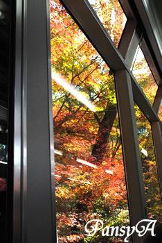 叡山電車「きらら」の車中の写真